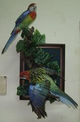 Чучела попугаев