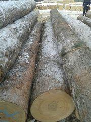 кедр лес