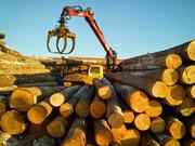Поставка древесины из Сибири в РБ. Пиломатериалы,  брус,  кругляк