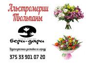 Хризантемы,  тюльпаны,  альстромерии 5 % СКИДКА!