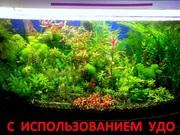 Удобрения(УДО микро,  макро,  калий,  железо) ---для аквариумных растений