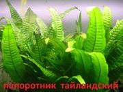 Папоротник тайландский и др. растения - НАБОРЫ растений для запуска. П