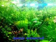 Кринум волнистый и др. растения - НАБОРЫ растений для запуска. ПОЧТОЙ