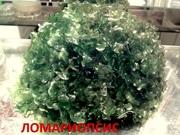 Папоротник ломариопсис и др. растения. НАБОРЫ растений для запуска. По