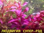 Людвигия СУПЕР-РЭД и др. растения. НАБОРЫ растений для запуска акваса.