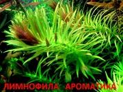 Лимнофила ароматика и др. растения. НАБОРЫ растений для запуска акваса