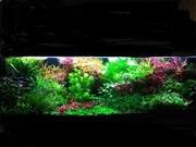 Удобрения(микро,  макро,  калий,  железо) для аквариумных растений.. ПОЧТ