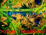 Ротала. НАБОРЫ растений для запуска акваса. ПОЧТОЙ отправ/