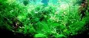 Удобрения(микро,  макро,  калий,  железо) для аквариумных растений.