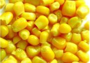 Кукуруза фуражная оптом постоянно