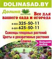 Саженцы плодовых и декор-ных растений,  семена,  луковицы цветов. Минск