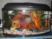 Аквариум AQUAEL на 70л с рыбками и всем необходимым ТОРГ !!!