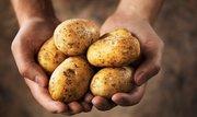 Разносортный картофель