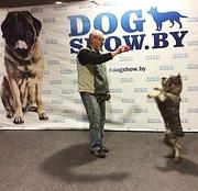 Консультации по воспитанию и дрессировке щенков,  собак по интернету.