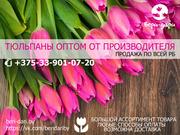 Тюльпаны оптом. Низкие цены