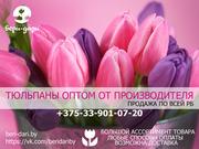 Тюльпаны оптом. Продажа по РБ.