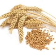 Закупаем на постоянной основе пшеницу. Оплата по факту.