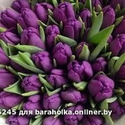 Тюльпаны оптом к праздникам.