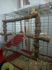 Игрушки для мелких, средних, крупных попугаев.Собсвенное изготовление.