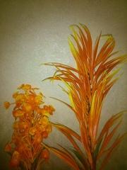 Растения для аквариума, яркие, красивые 25-35см