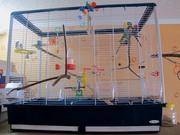 Качели, жердочки для птиц из натурального дерева с корой в клетку