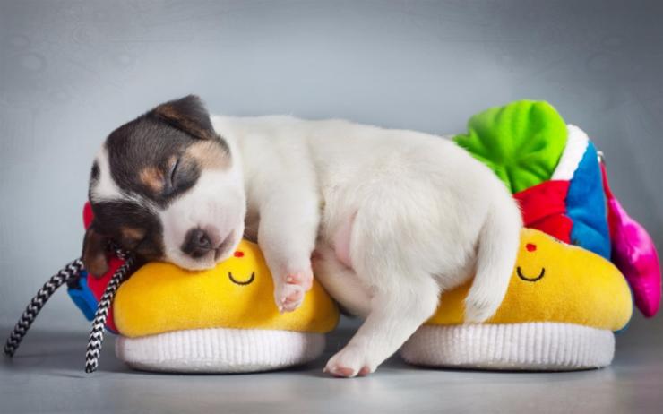 Дрессировка и воспитание щенков. Групповые занятия