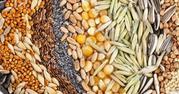 Куплю зерно,  семена,  кормовые добавки