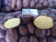 Картофель оптом,  сорта Скарб,  Бриз,  Манисей