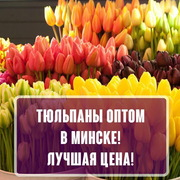 Тюльпаны оптом к 8 Марта.