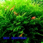 Мох крисмас --- аквариумное растение и  разные растения.