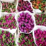Цветы.Тюльпаны. Оптом.