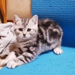 Котенок, котик, в мраморной шубке.