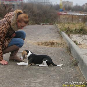 Групповые занятия по дрессировке в центре Минска
