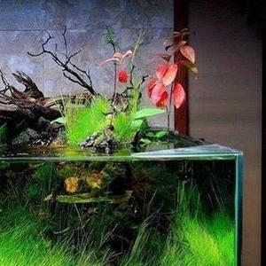 Аквариумные растения шёлковые.Идеальный вариант...