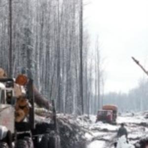 Заготовка зимнего леса кедр лиственница сосна ангарская