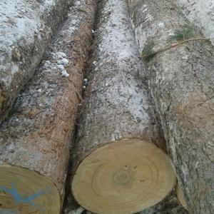Лес кругляк Кедр и лиственница для домостроения