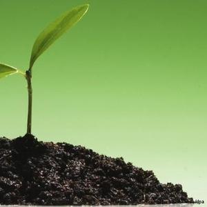 Известняк для раскисления почвы