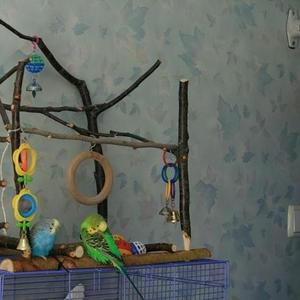 Игровые стенды для попугаев, из натурального дерева, возможна доставка