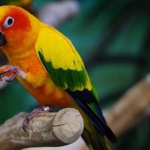 Услуги.Передержка экзотических птиц.