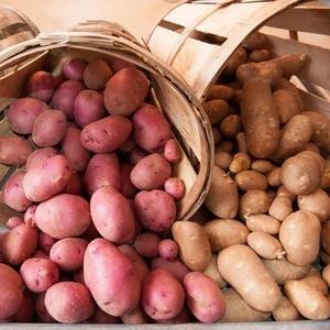 Закупка картофеля