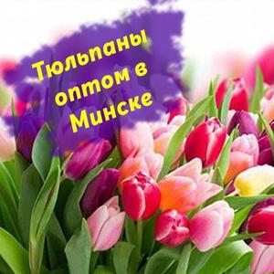 Тюльпаны оптом в Минске,  лучшая цена.
