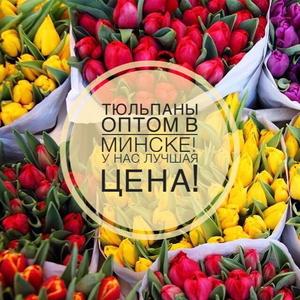 Тюльпаны оптом с доставкой.