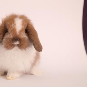 Кролики из питомника веселый хвостик