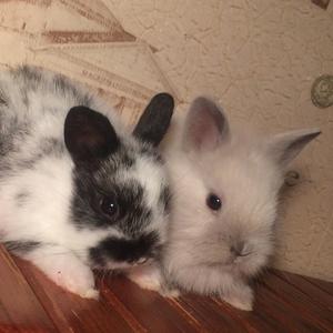 Кролики из питомника Беларусь