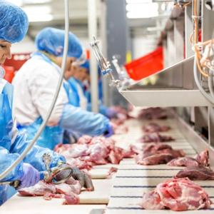 Рабочие на Куринный завод