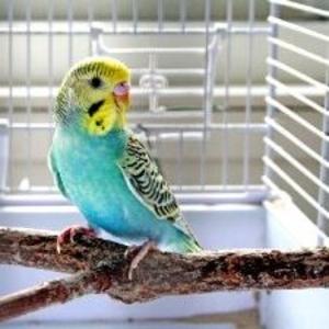 Передержка экзотических птиц на время отсутствия