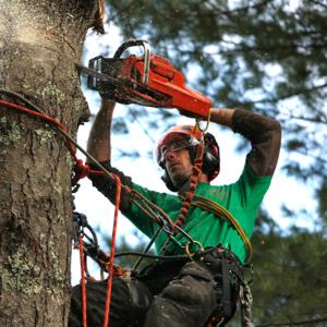 Обрезка и удаление (валка) деревьев