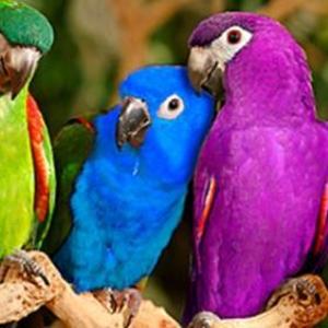 Услуги для животных.Передержка экзотических птиц