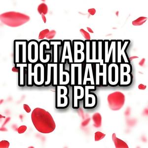 Тюльпаны оптом склад в Минске. Смотри