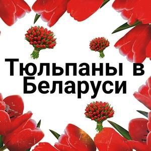 Тюльпаны оптом к 8 Марта. Поставщик тюльпанов